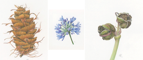 Adult Class: Drawing & Painting Botanicals with Colored Pencil - Session II: Applications