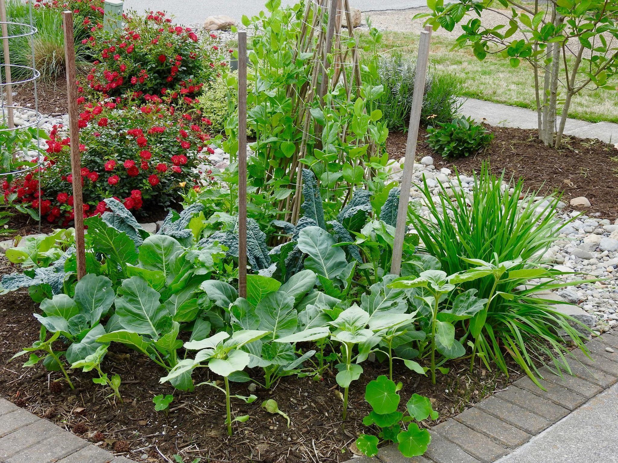 Vegetable Gardening Classes