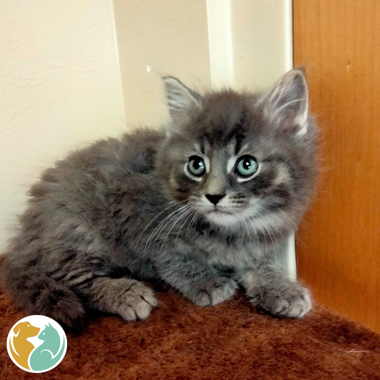 DRACO - Adopted 06/13!