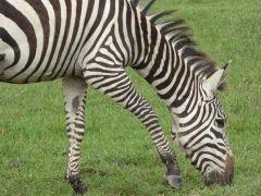 Zebra Printing Introduction