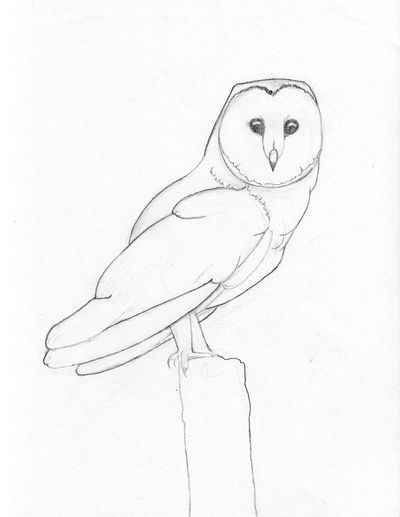 Sketching Birds with Bethany Wray