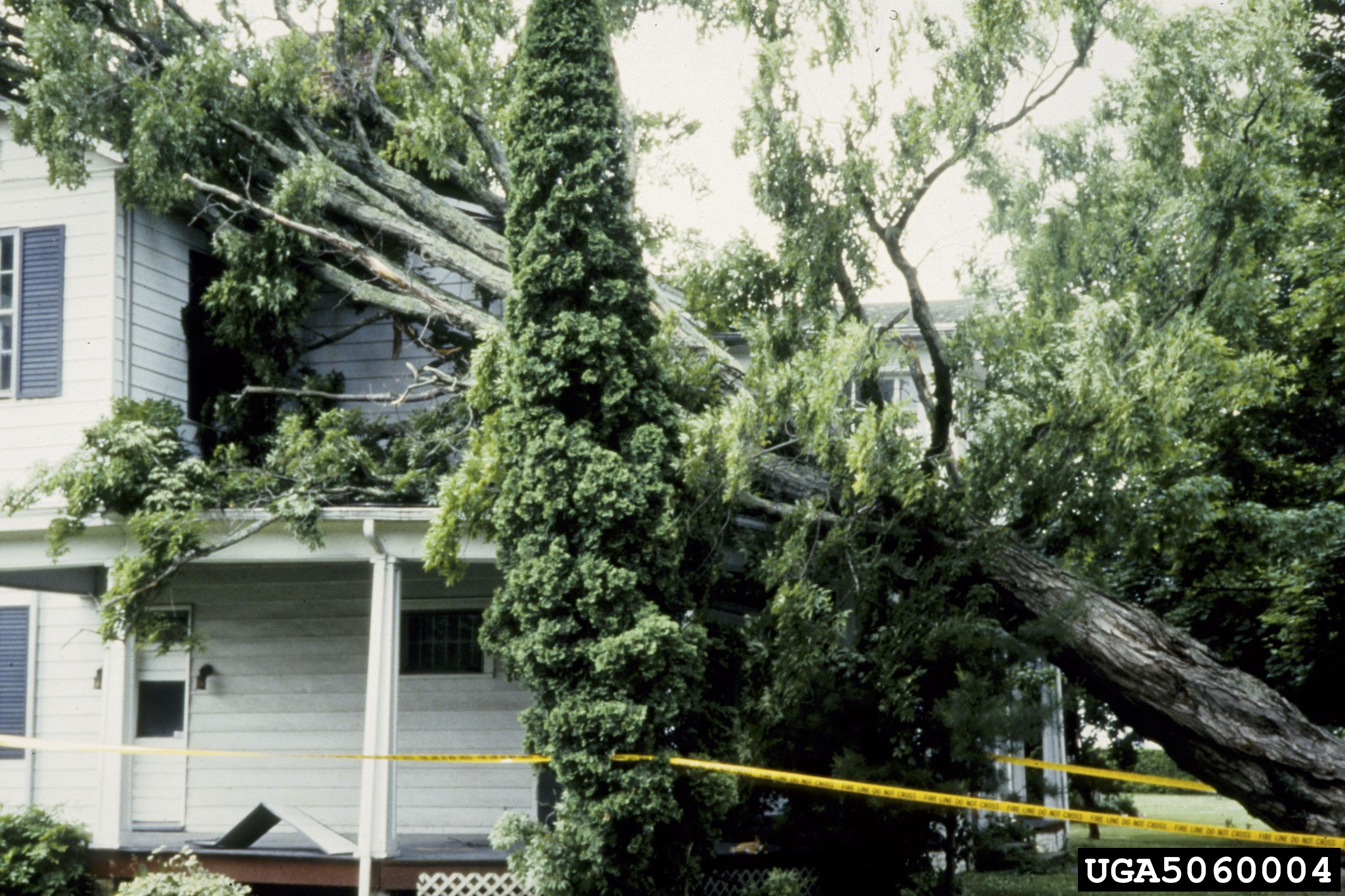 When the Storm Hits:  Is Your Urban Forest Ready?