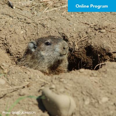 """Groundhog: Mammalian Meteorologist"" Virtual Program – Click Here to Register"