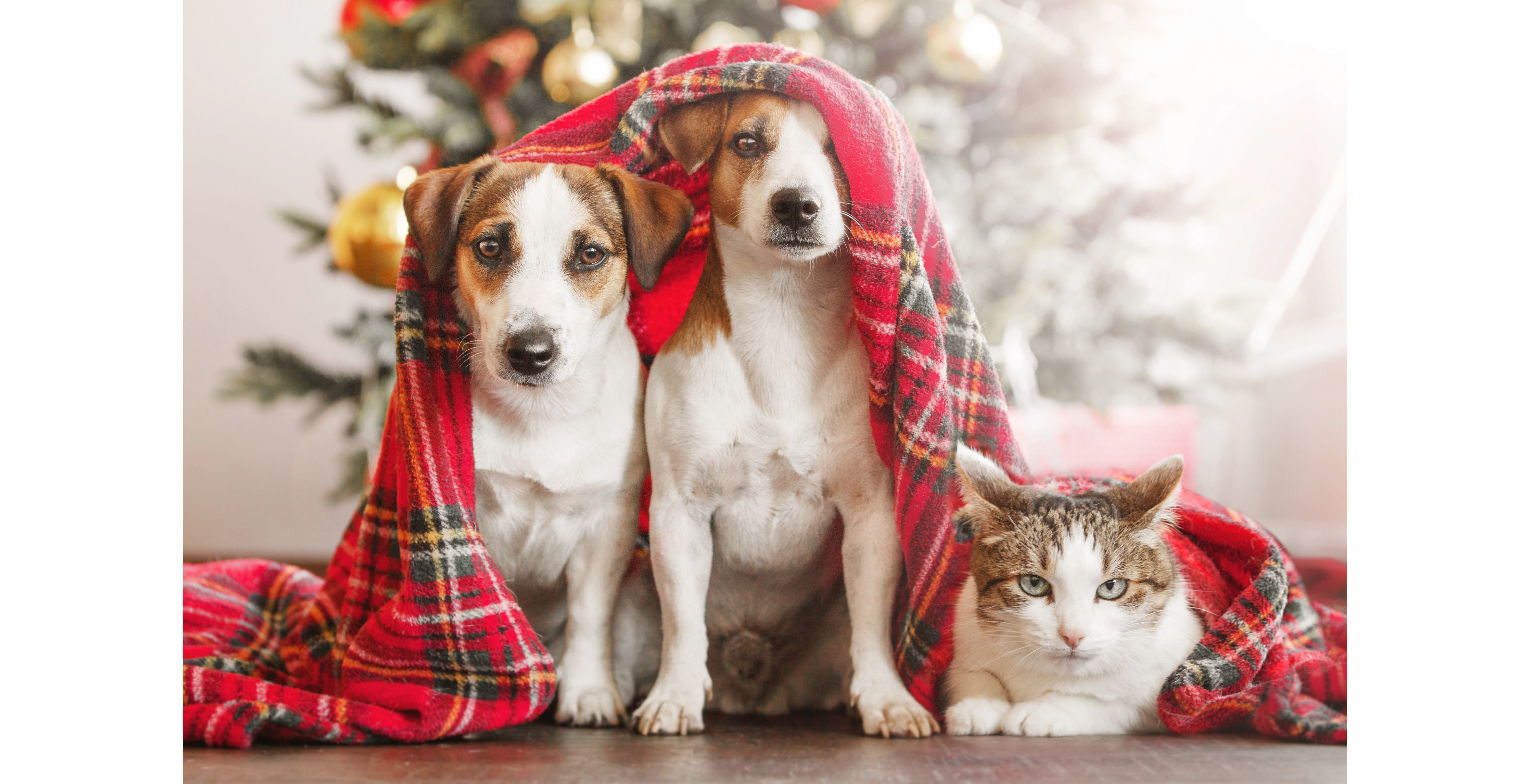 A Shelter Pet is Counting on You this Holiday Season