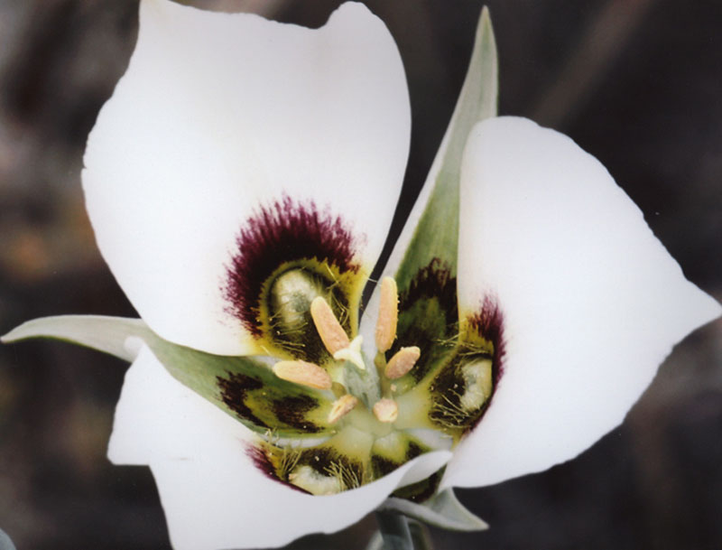 2nd - Flora