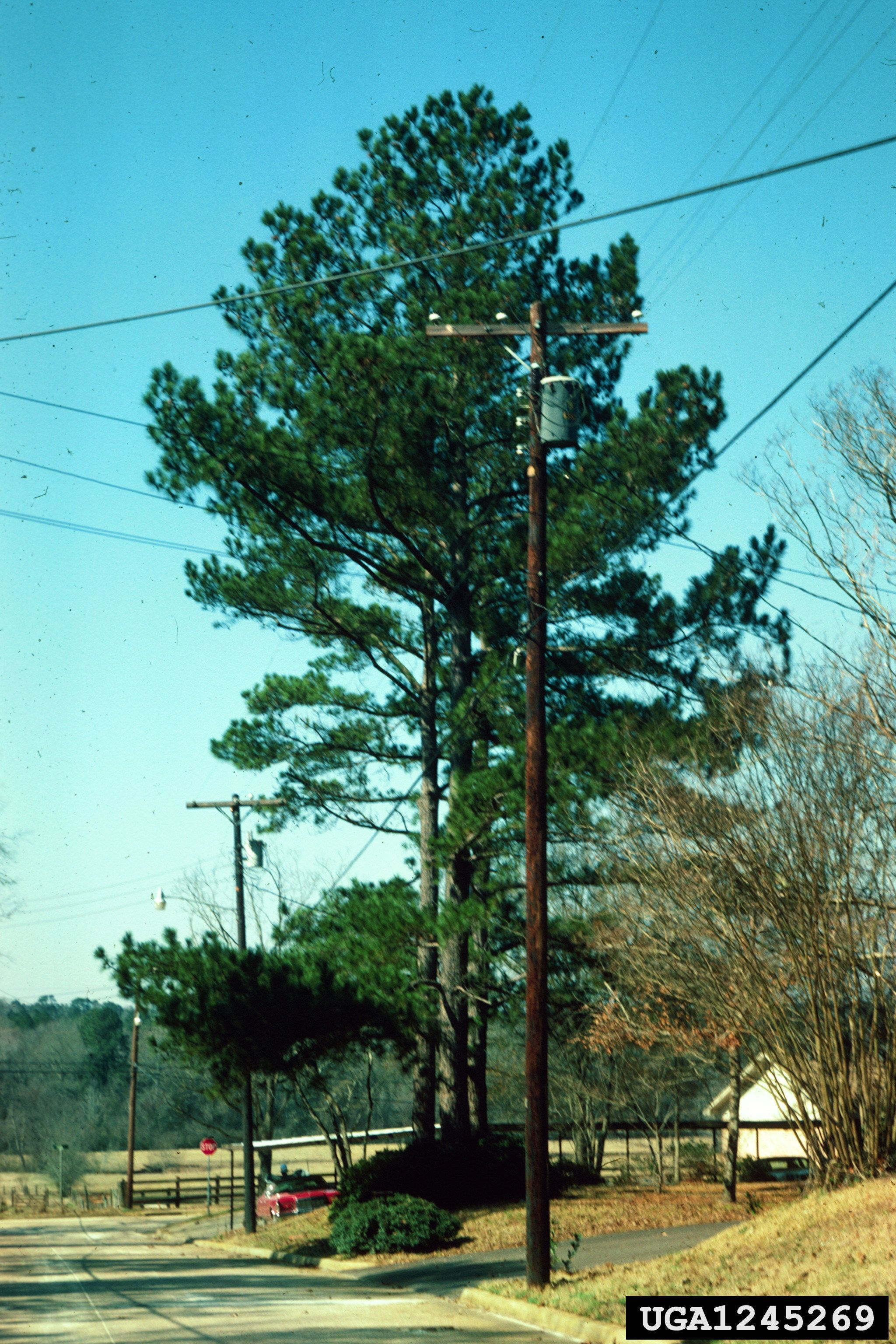 Trees and Electrical Safety