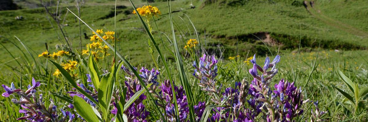 Nebraska Statewide Arboretum Connect Events Wildflower Week