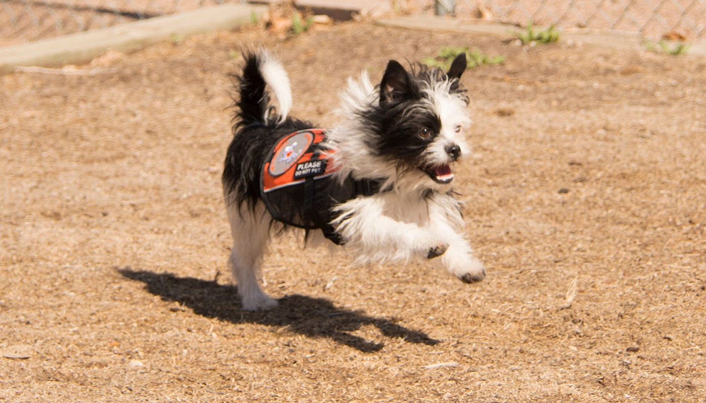 International Hearing Dog, Inc. Announces 1300th Hearing Dog Placement