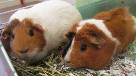 Millie & Winnie