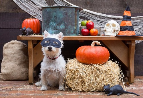 Goodwill Halloween Pet Costume Ideas