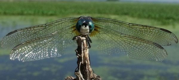 RESCHEDULED TO 09/17: a Thirst for Nature event - Dragonflies of the Cibolo