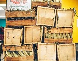 Organic Corn Crates