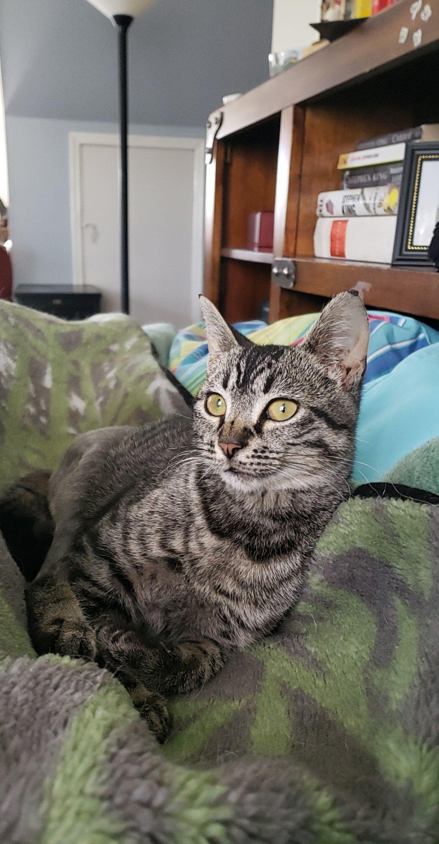 4/2/20: Casco (aka Penny)
