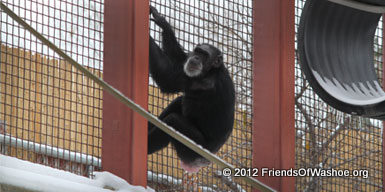 Tatu climbs the fencing in the outdoor area