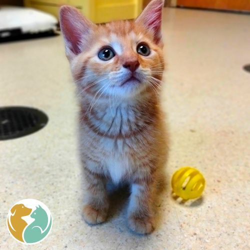 MASCARPONE - Adoption Pending!
