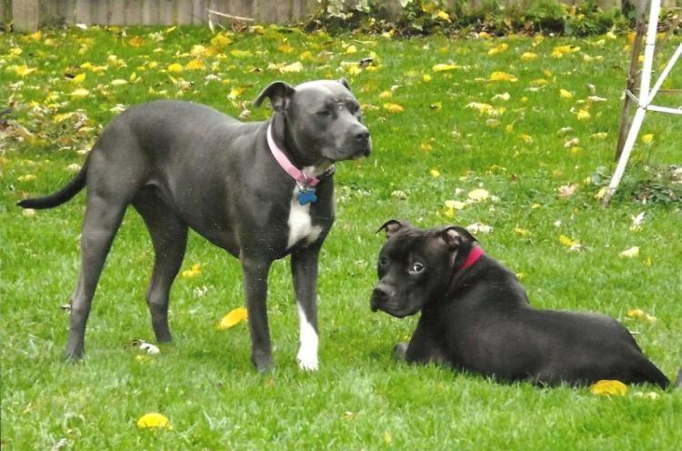 Lennox & Sadie