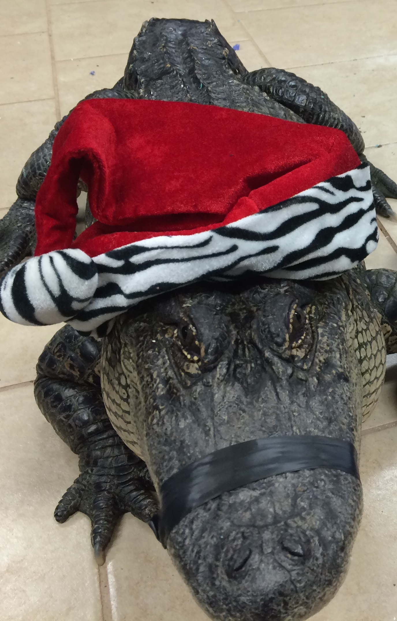 1PM Special Croc Holiday Tour