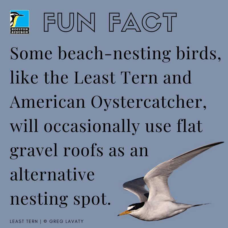 Beach-nesting birds