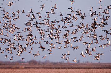 Delta Waterfowl Thrives on Social Media, Reaches 100,000 Facebook Fans