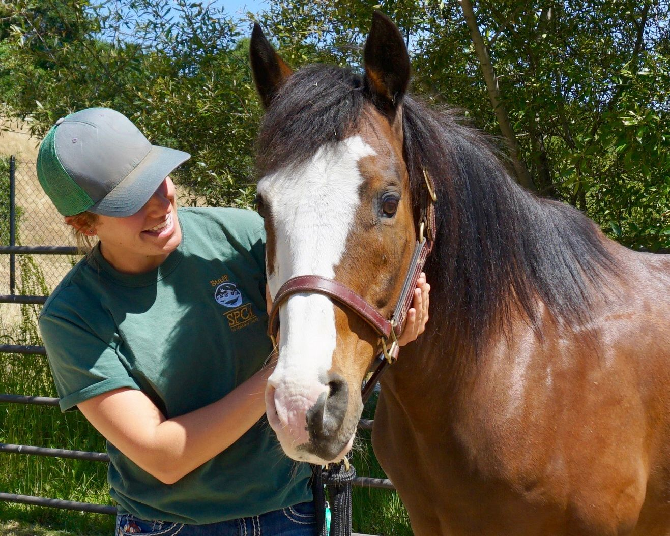 Horse Adoption Application