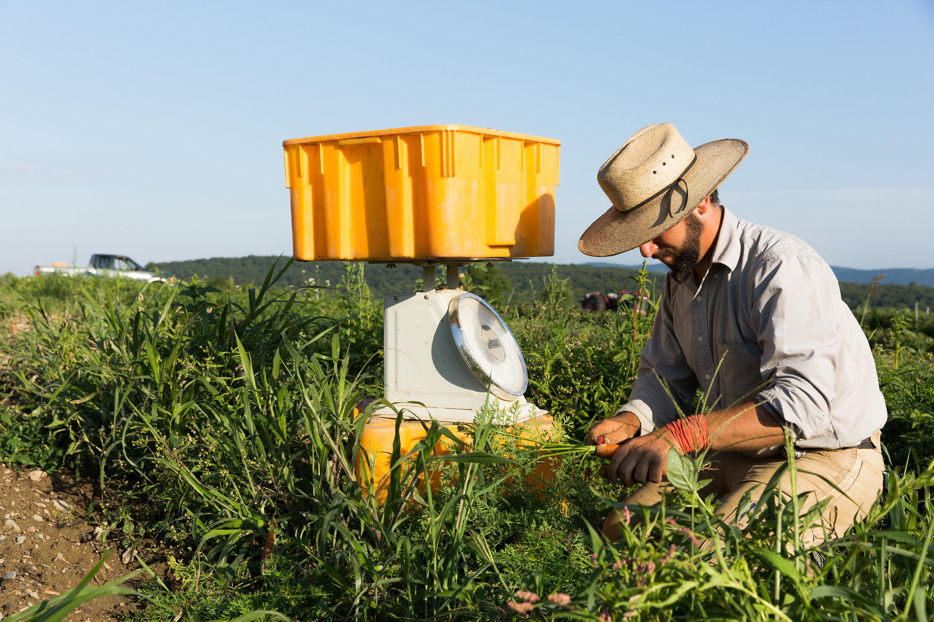 Farm with your Farmer: Weeding