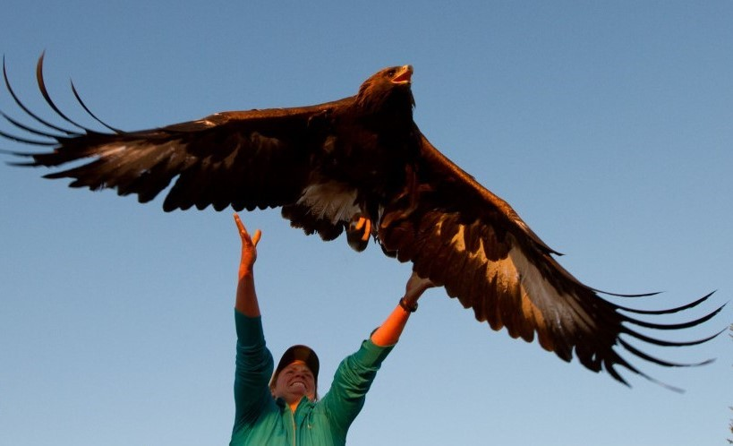 Chelan Ridge Hawkwatch Field Trip