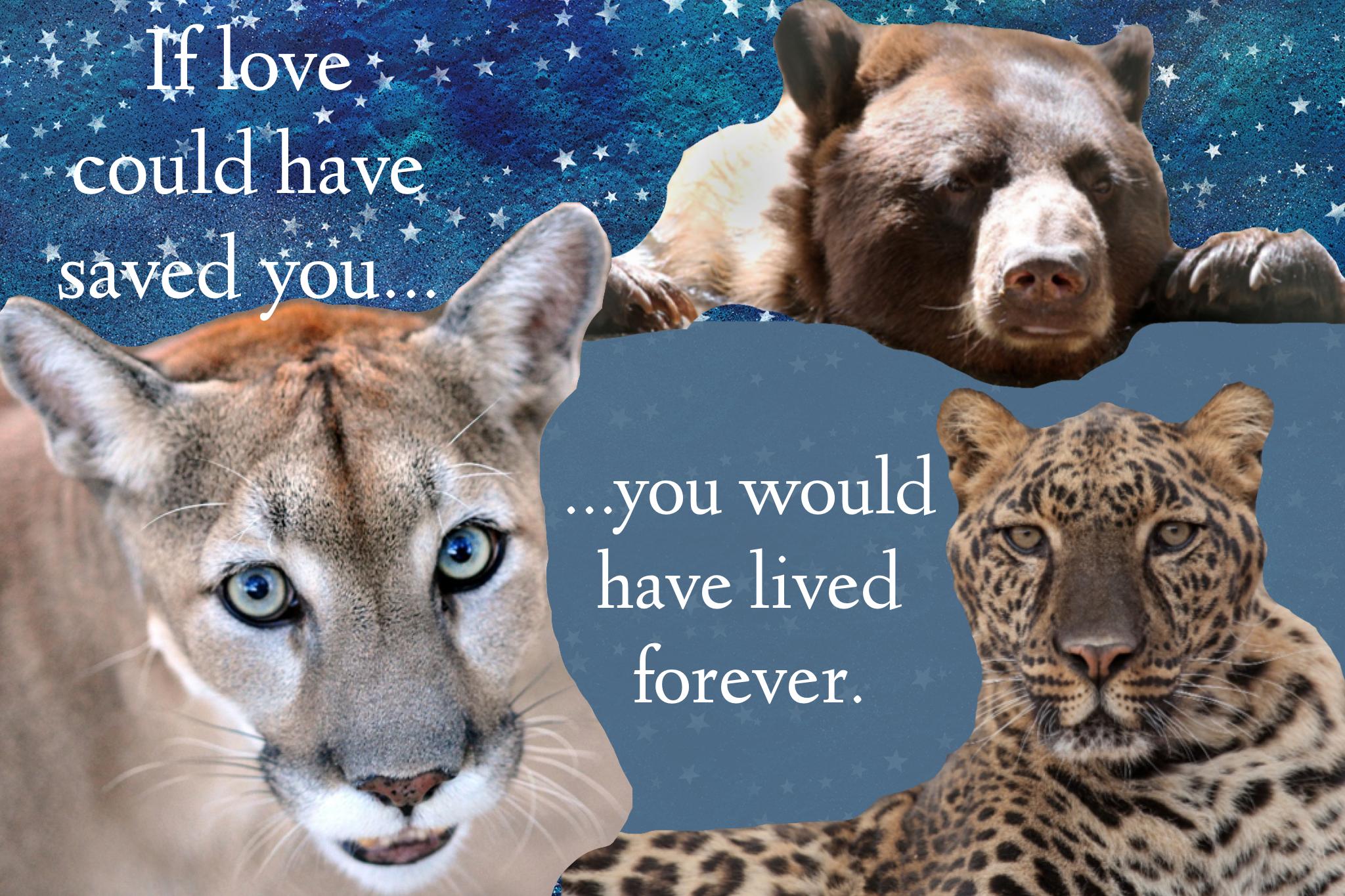 Wildlife Weekly: Memories Across the Rainbow Bridge