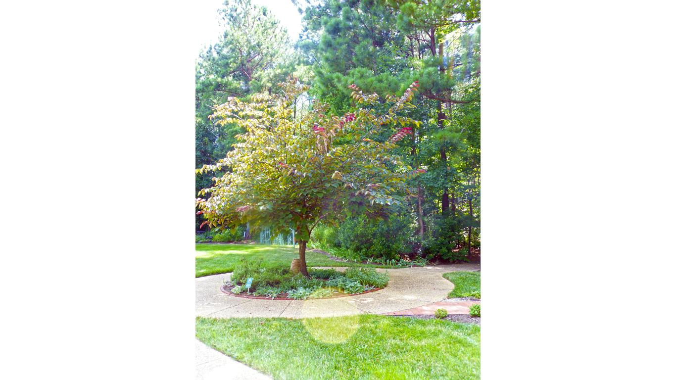 Silver-leafed Garden 3