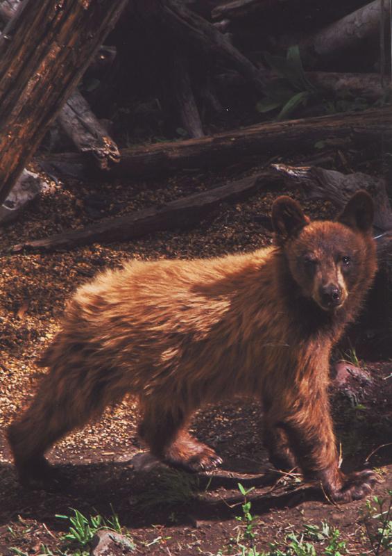 3rd - Wildlife