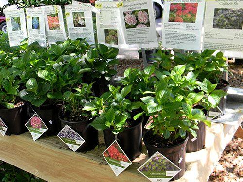 Plan Your Garden Class