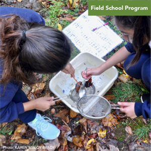 Field School - Stream Exploration