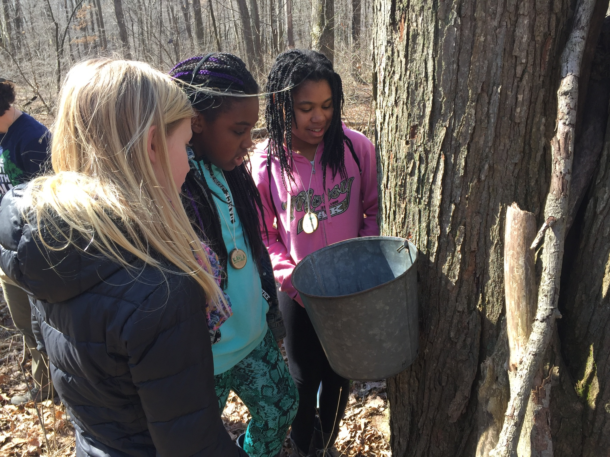 Maple Sugaring Season