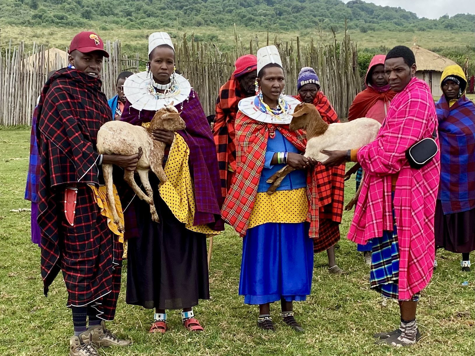 Provide  Her Family Goats & Sheep