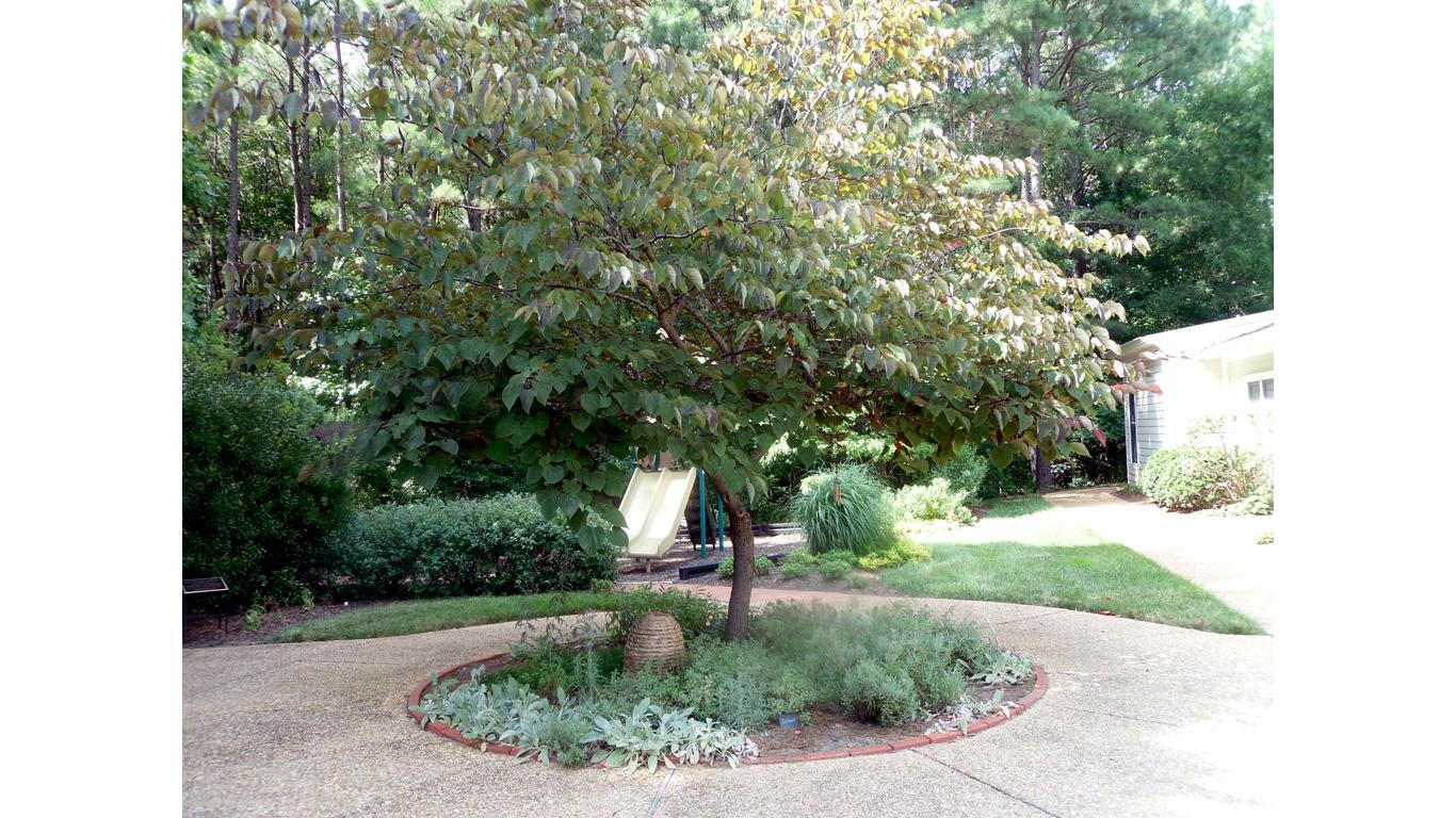 Silver-leafed Garden 1