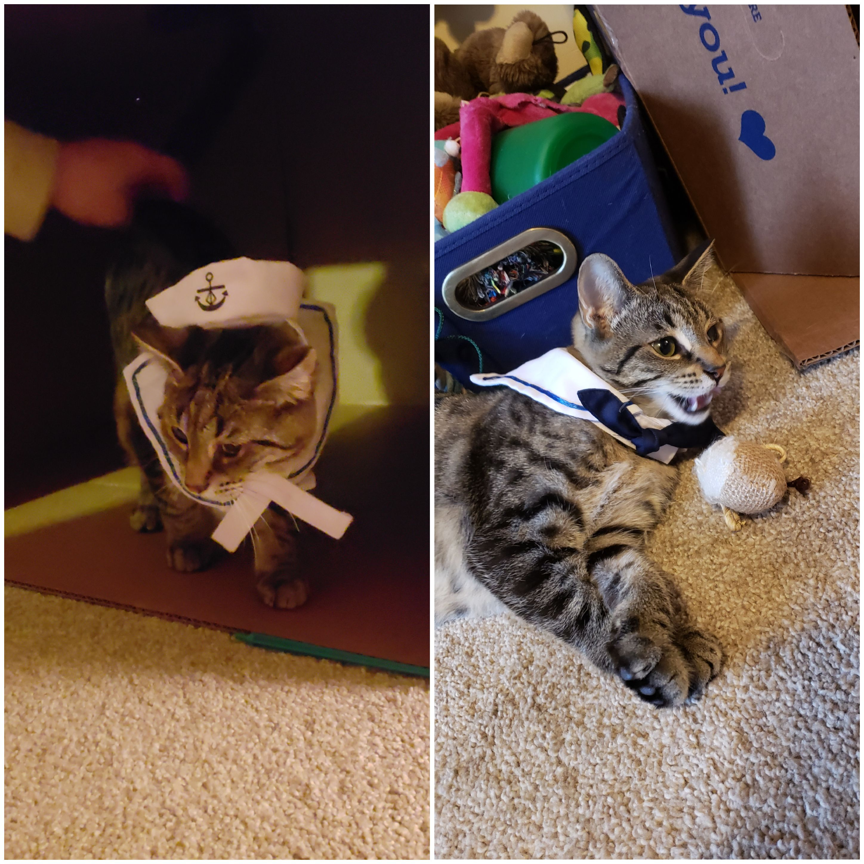 #9 Popeye the Sailor Cat