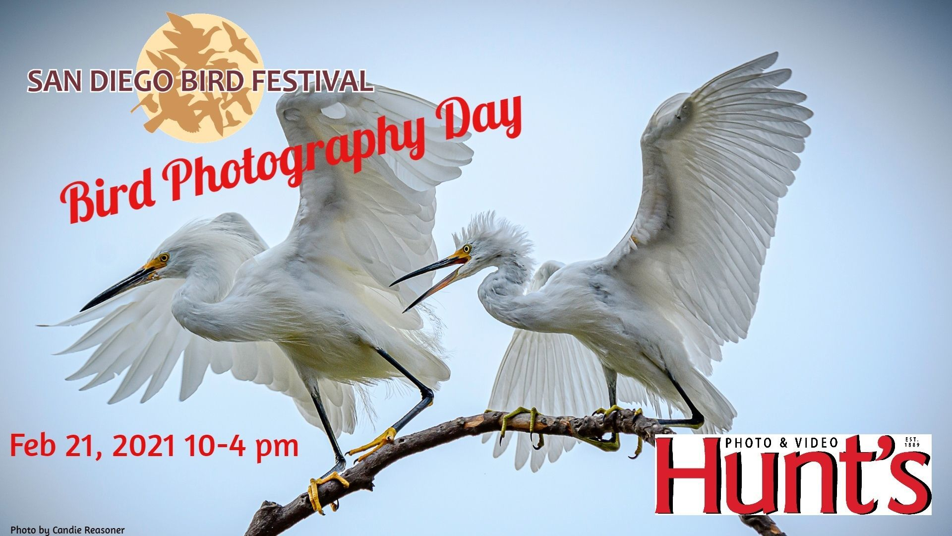 San Diego Bird Festival Photography Day Sponsored by Hunts Photo and Video