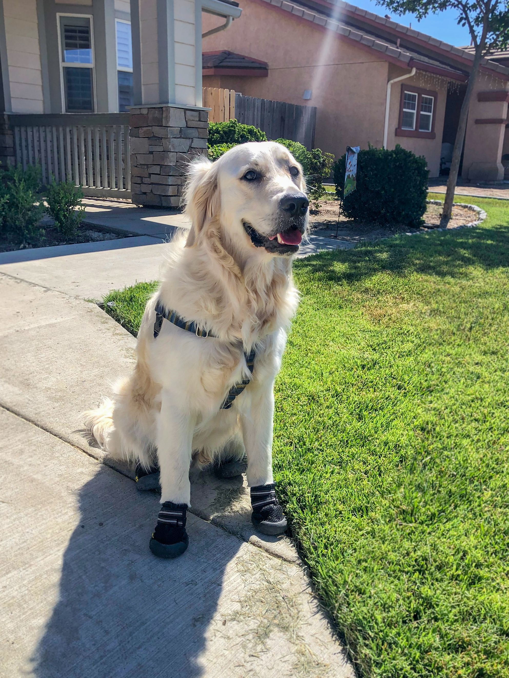 6 Tips to Keep Your Service Dog Safe this Summer