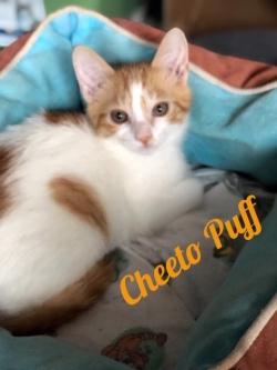 Cheeto Puff 31719