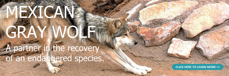 Mexican wolf holding facility