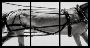HORSESCAPES