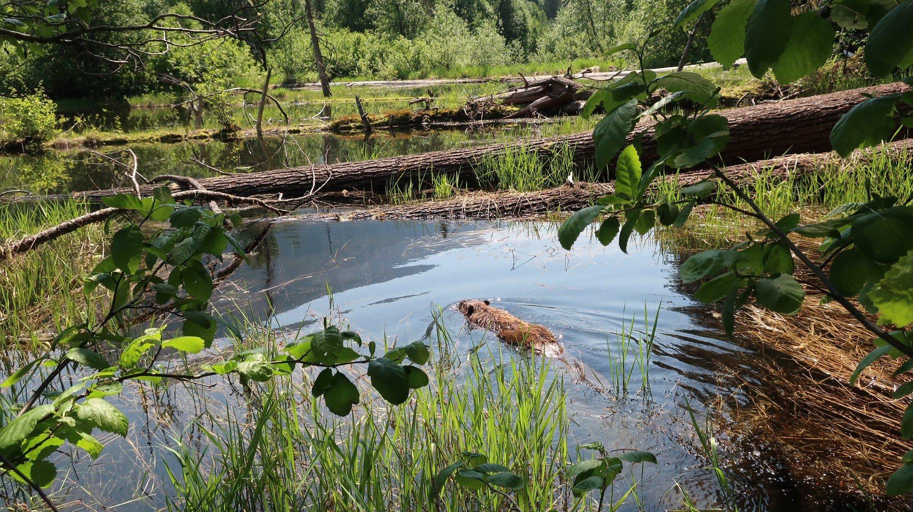 Wenatchee Beaver Project Field Trip