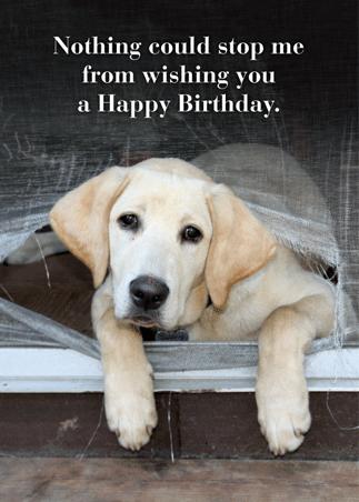 Birthday: A-7