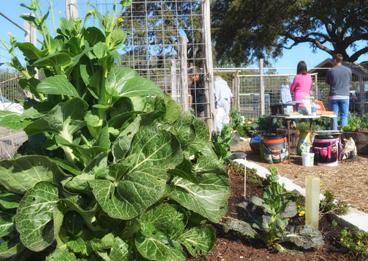 Gardening programs