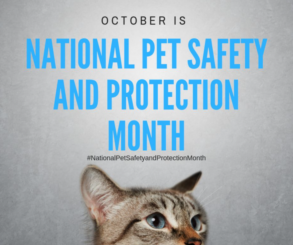 National Pet Safety and Protection Month