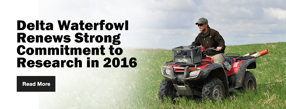 Delta Waterfowl Renews Strong Commitment to Research in 2016