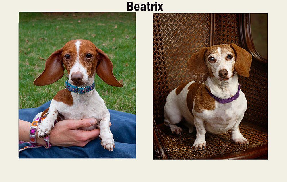 11/4/19: Beatrix (BB)