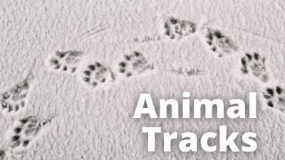Audubon at Home Animal Tracks