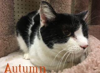 Autumn adopted 061718