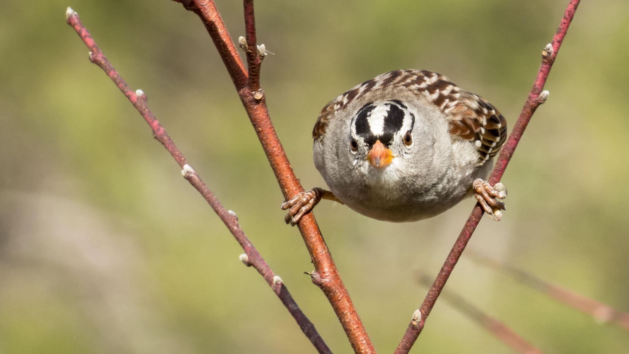 CE:3rd Tuesday Bird Walk @ Spring Creek