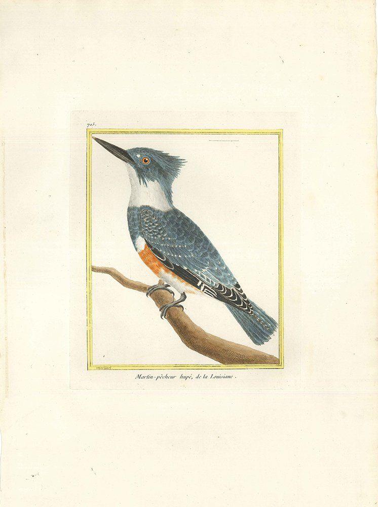 Bird-ology